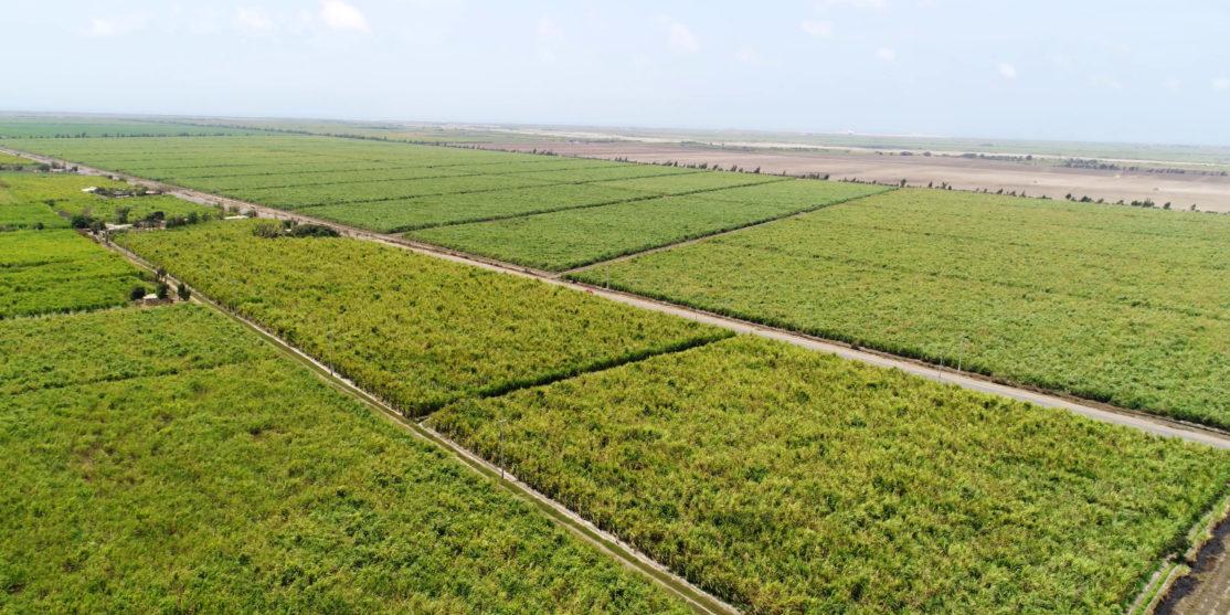 aerial-sugar-cane-monoculture-footage-089381115_prevstill
